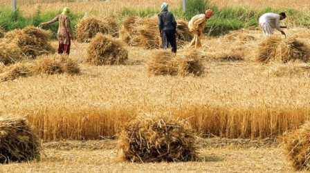 The food department is currently facing a debt worth Rs190 billion due the wheat procurement program.