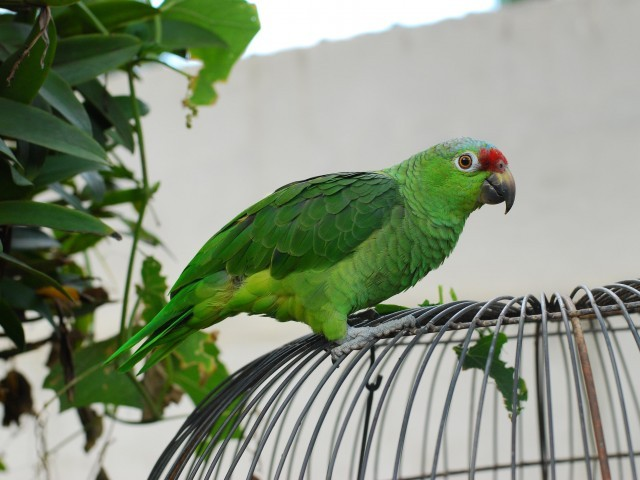 The parrot started squawking when the fire started by a short-circuit. PHOTO: FILE