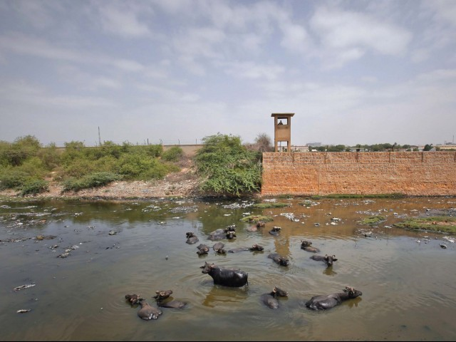 A soldier keeps guard from a watchtower as water buffalos wade through a stream around the compound walls of PNS Mehran. PHOTO: REUTERS