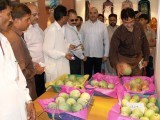 The president of Hyderabad Chamber of Commerce, Seth Goharullah going around the different mango stalls set up as part of a Mango festival in Hyderabad. PHOTO: SHAHID ALI/EXPRESS
