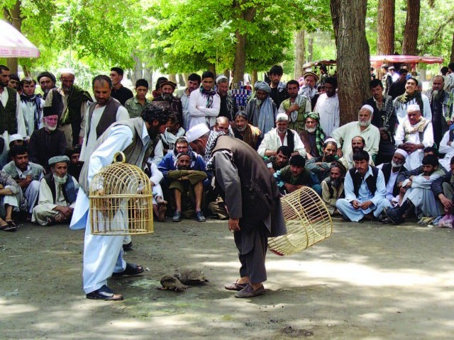 A crowd gathers for a partridge fight on a Friday afternoon in Kabul's Shar-e-Now Park.
