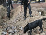 sniffer_dogs_blast_crater_site_delhi-photo-reuter