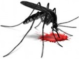 mosquito-dengue-blood-virus-fever-2-3-2-2-2-2-2-2-2-2-2-2-2-2-2-3-2-2-2-2-3-2-2-2-3-2-2-2-2