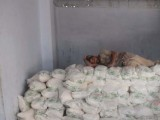 flour-mills-photo-mohammad-noman-2-2-2-2-2-2