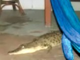 An Australian woman tells how she got up in the middle of the night to find a saltwater crocodile in her living room.