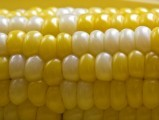 corn-bhutta-kernel-maize-photo-sxc