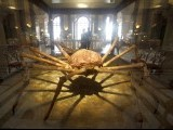 A historic mounted giant crab is displayed at the Naturhistorisches Museum Wien (Museum of Natural History) in central Vienna April 3, 2012.  PHOTO: REUTERS