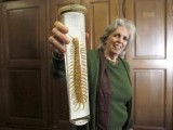 A scientist holds up a preserved poisonous centipede in a laboratory of the Naturhistorisches Museum Wien (Museum of Natural History) in central Vienna April 5, 2012. PHOTO: REUTERS