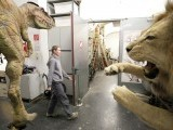 A taxidermist walks through the laboratory of the Naturhistorisches Museum Wien (Museum of Natural History) in central Vienna April 18, 2012. PHOTO: REUTERS