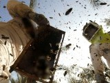 Palestinian beekeepers work at an apiary near the central Gaza Strip refugee camp of Bureij on April 26, 2012. PHOTO: AFP