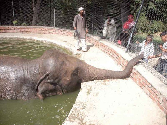 An undated file photo of Saheli entertaining visitors while beating the heat (above), Faiz Muhammad crying besides Saheli's body. PHOTO: FILE, ONLINE
