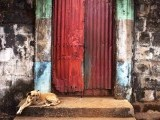 A dog sits on the steps of a door into the compound of a traditional colonial-era Board House dating back about a century in the Murray Town neighbourhood of Sierra Leone's capital Freetown April 28, 2012. Picture taken April 28, 2012. PHOTO: REUTERS