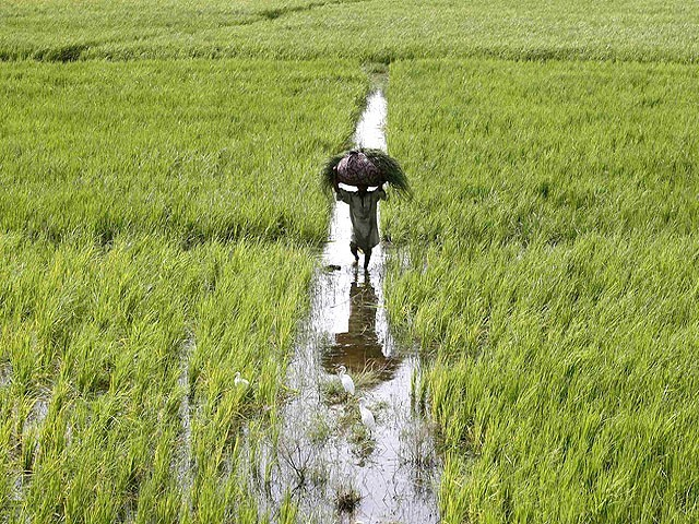 AGRICULTURE: 2.5 % is the average annual growth in agricultural sector in the Punjab in 2007-11. The figure for rest of the country is 2.7 %.  PHOTO: FILE/REUTERS
