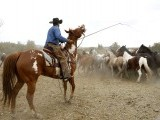 Kail Mantle herds horses in a corral before Montana Horses' annual horse drive outside Three Forks, Montana, May 3, 2012. PHOTO: REUTERS