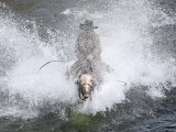 Wrangler Shad Boardman rides his horse across a river during Montana Horses' annual horse drive outside Three Forks, Montana, May 4, 2012. PHOTO: REUTERS