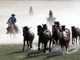 Renee Mantle separates horses during Montana Horses' annual horse drive outside Three Forks, Montana, May 3, 2012. PHOTO: REUTERS
