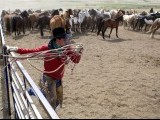Wrangler Nate Cummins jumps into a corral full of horses during Montana Horses' annual horse drive outside Three Forks, Montana, May 5, 2012. PHOTO: REUTERS