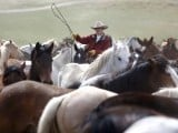 Renee Mantle sorts a herd of horses in a corral during Montana Horses' annual horse drive outside Three Forks, Montana, May 5, 2012.  PHOTO: REUTERS