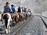 Wranglers travel up a train rail line during Montana Horses' annual horse drive outside Three Forks, Montana, May 6, 2012.  PHOTO: REUTERS