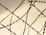 barbed-wire-2-2-2-2