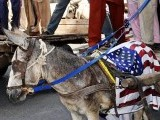 Protesters tie US and Israeli flags on donkeys during a protest in Faisalabad. PHOTO: ONLINE