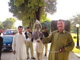 rare-falcons-photo-the-express-tribune