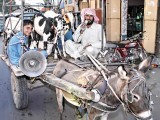 cattle-markets-photo-app-and-khurram-shahzad-express