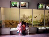 The PMNH receives few visitors due to basic exhibits. PHOTO: MYRA IQBAL/EXPRESS