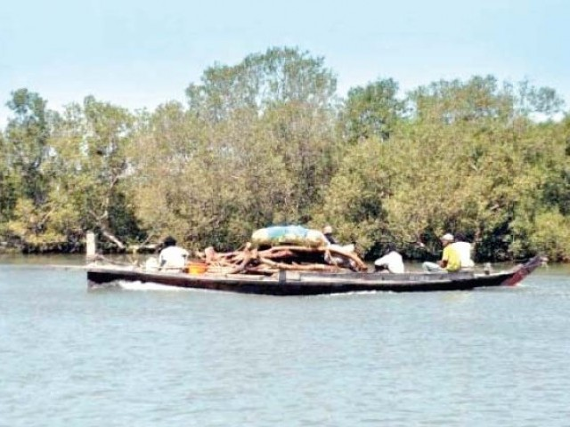 This file photo shows the mangroves around Port Qasim which largely attribute to the bounty of fish available in the waters. According to Muhammad Ali Shah, Pakistan Fisherfolk Forum's chairperson, previously there was 2.6 million hectares of mangrove forest along the coastal belt which has now been reduced to 70,000.