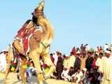 Seven-week festival continues in Cholistan.