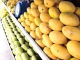 mango-photo-file-4-2-2-2-2-2-2-2
