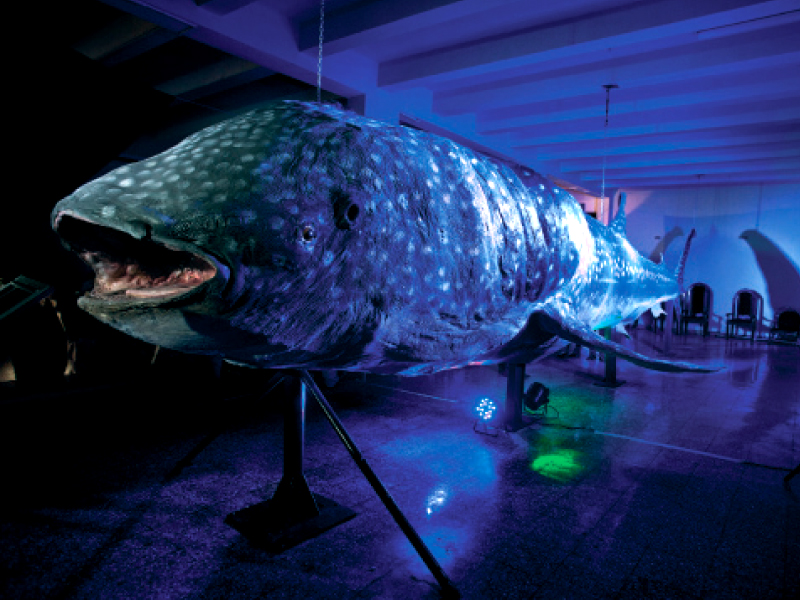 the whale shark exhibit is open at the pakistan museum of natural history but the overall environment still leaves something to be desired
