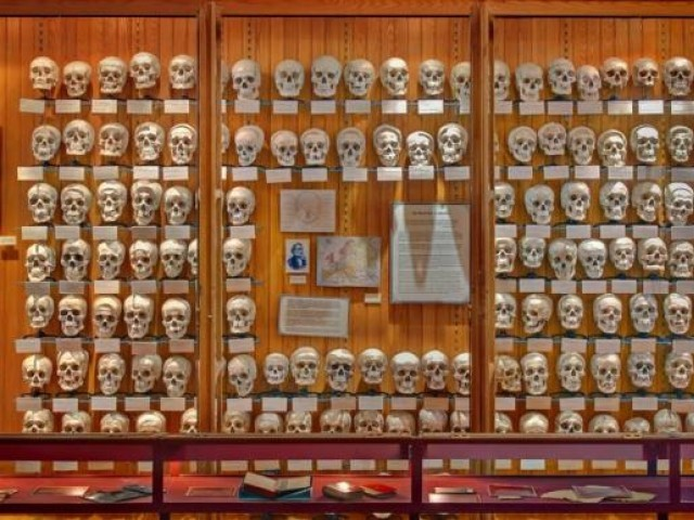 The Hyrtl Skull Collection is photographed in the Mutter Museum of The College of Physicians of Philadelphia in Philadelphia, Pennsylvania June 11, 2009 in this handout image released to Reuters on December 11, 2013. PHOTO: REUTERS