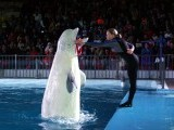 Stephen, the Beluga, (L) catches hoops with its mouth with Ukrainian trainer Inga Strekach (R) during the show at the Maritime Museum in Karachi. PHOTO: ONLINE