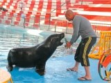 Memo, the sea lion (L),  practices with Egyptian trainer Fauad Sharif (R) before the show at the Maritime Museum in Karachi. PHOTO: AYESHA MIR/EXPRESS