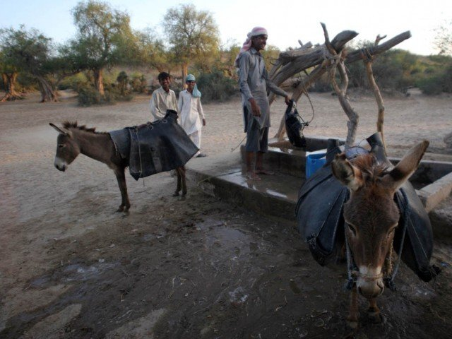With moderate to low rainfall occurring until late September last year, the government pushed the declaration of state of drought in Thar and provision of relief was thus delayed. PHOTO: EXPRESS/FILE