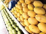 mangoes-copy-2
