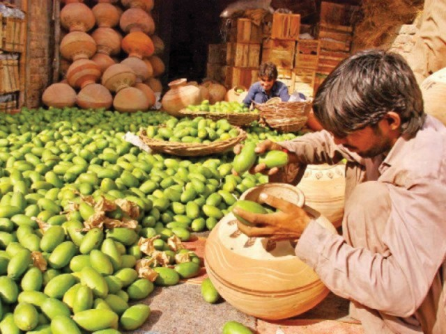 The extra cautious approach is the result of a recent EU ban on the import of five types of fruits and vegetables from India due to presence of pests and fruit flies. PHOTO: FILE
