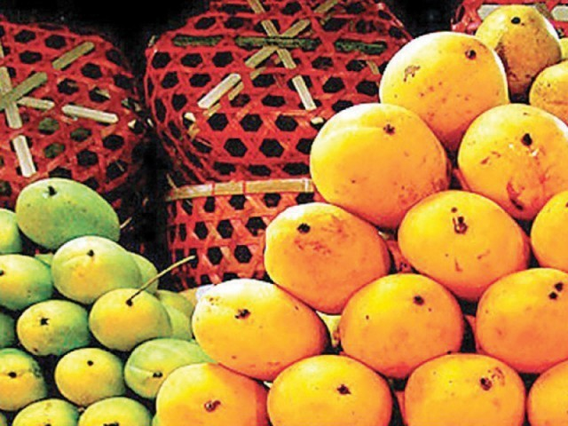 The government departments have traced the origin of the mango farms, but have failed to completely overcome the threat of fruit flies. PHOTO: FILE