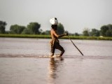 A man wades through flooded field in Chiniot. PHOTO: REUTERS