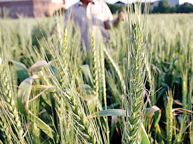 Enough excuses: Civil activists urge govt to formulate 'food security' plan