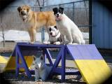dogs-photo-playfulpawspetcenter