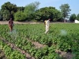 lhr_multan_agr_farmer_pestcide_app-2-2-2-4-2-2-2-2-2