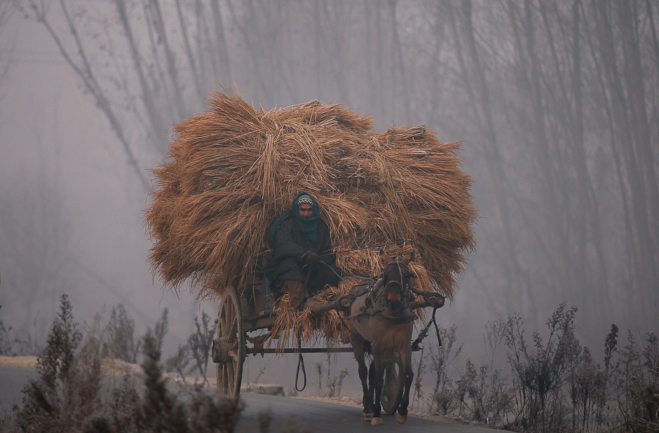 A man rides his horse cart loaded with bundles of dried grass on a cold winter morning in the outskirts of Srinagar December 6, 2016. REUTERS/Danish Ismail
