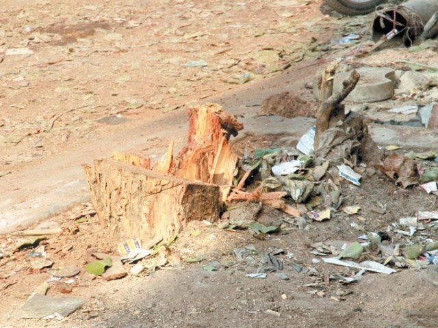 While a Karachi Metropolitan Corporation official said that the tree collapsed on its own, a horticulturalist believes the tree may have been axed. PHOTO: ATHAR KHAN/EXPRESS
