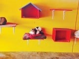 recovered-felines-chilling-at-their-cattery-copy