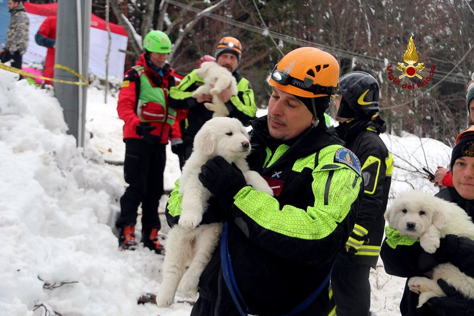 A firefighter holds one of the three puppies found alive in the rubble of the Hotel Rigopiano after the avalange, near Farindola, central Italy. PHOTO: REUTERS