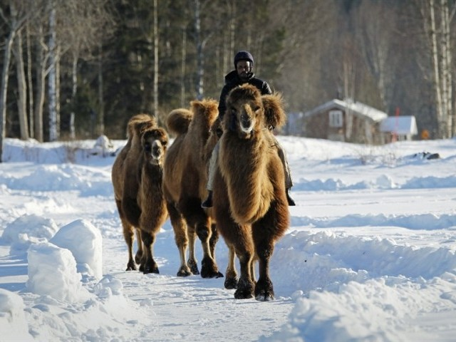 The Camel Centre,  granted over SEK1.5 million for its construction, is being built to create jobs and integrate immigrants into the community. PHOTO: REUTERS