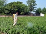 lhr_multan_agr_farmer_pestcide_app-2-2-2-4-3