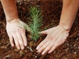 building-peace-through-environmental-conservation-2-2-2-2